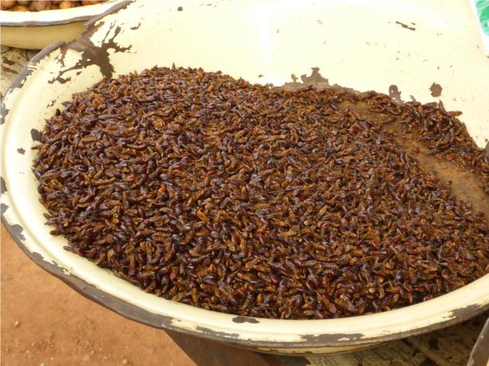 naja soo schlimm waren die fritierten Ameisen dann auch nicht..