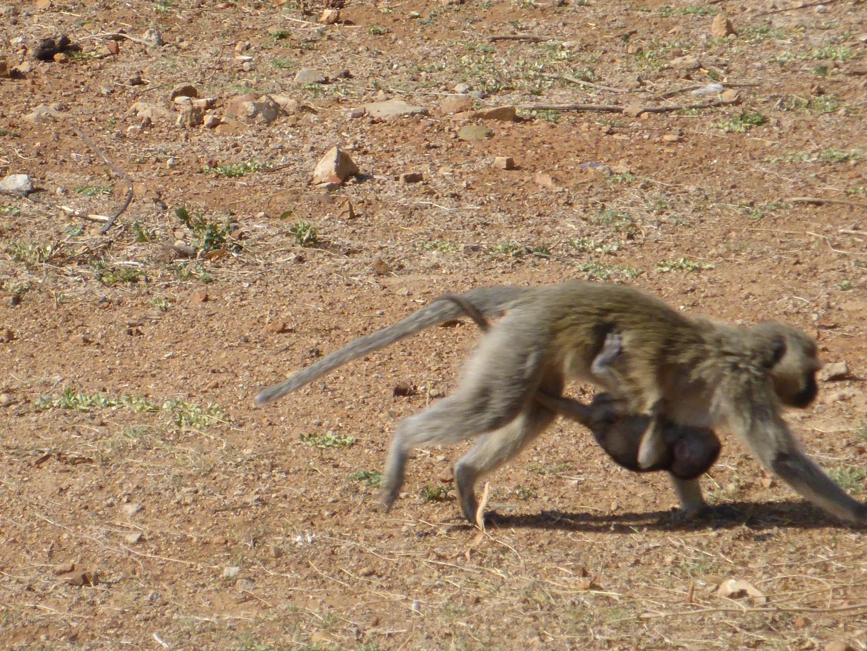 a baby monkey *-*