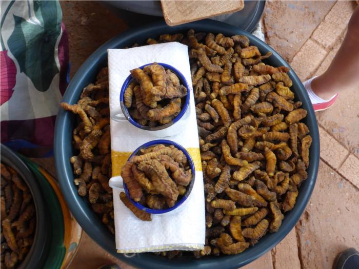 genauso wenig wie die Mabopane Worms,