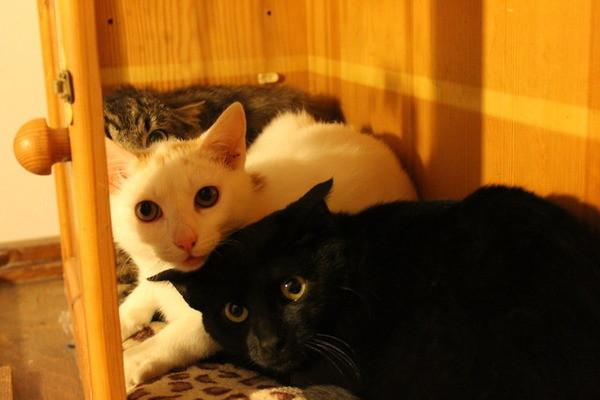 neue katze aussuchen kopf oder herz mietzefratz und co. Black Bedroom Furniture Sets. Home Design Ideas