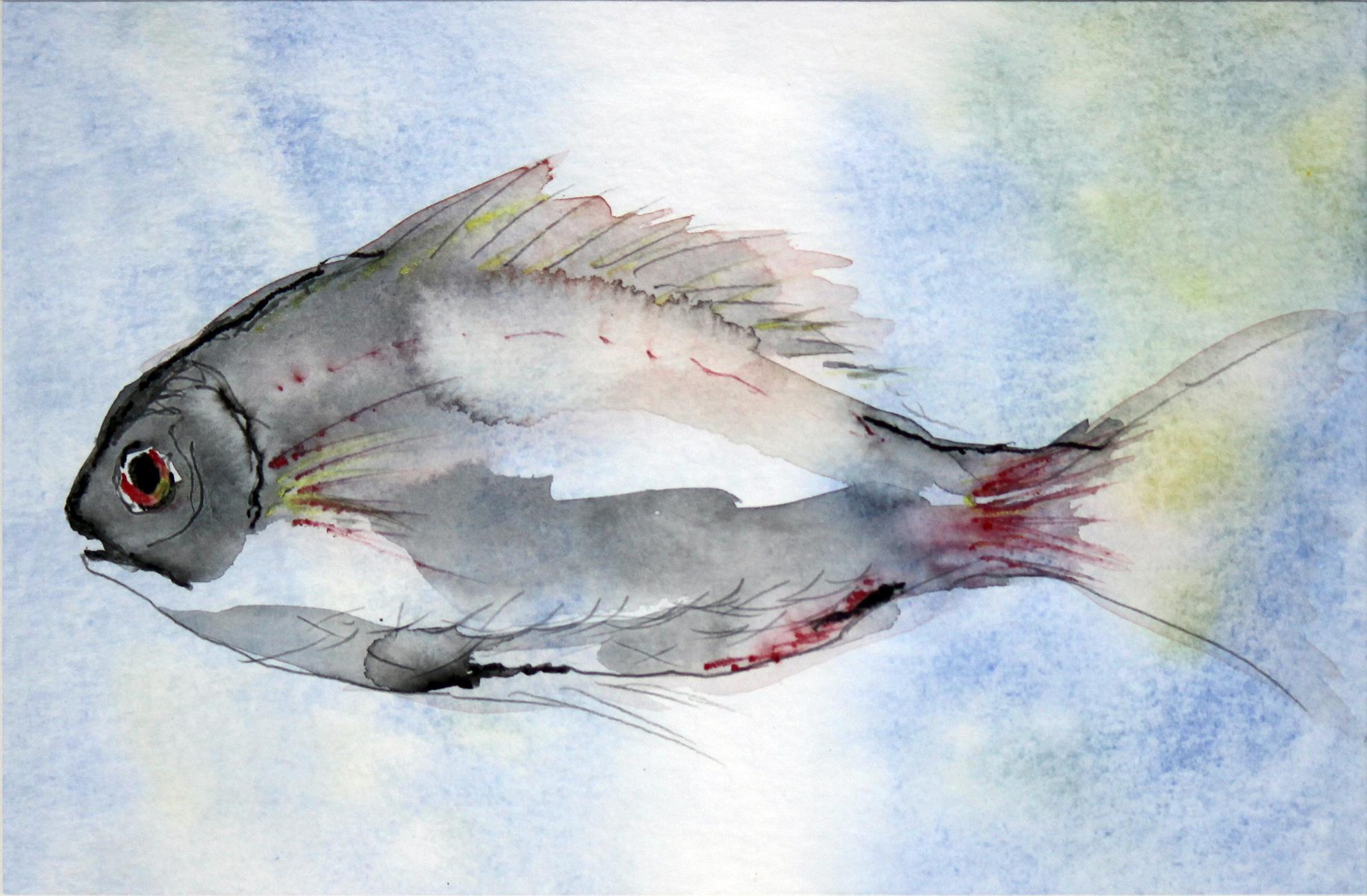 Glasfisch