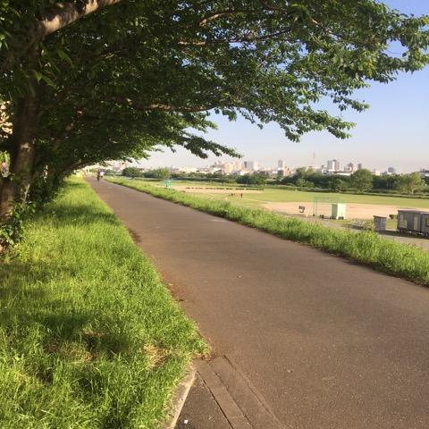ペットシッター キャットシッタ― 多摩川 サイクリングロード 6月 繁忙期 大田区 川崎
