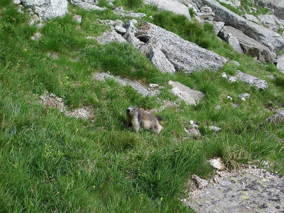 ...et une marmotte à l'horizon