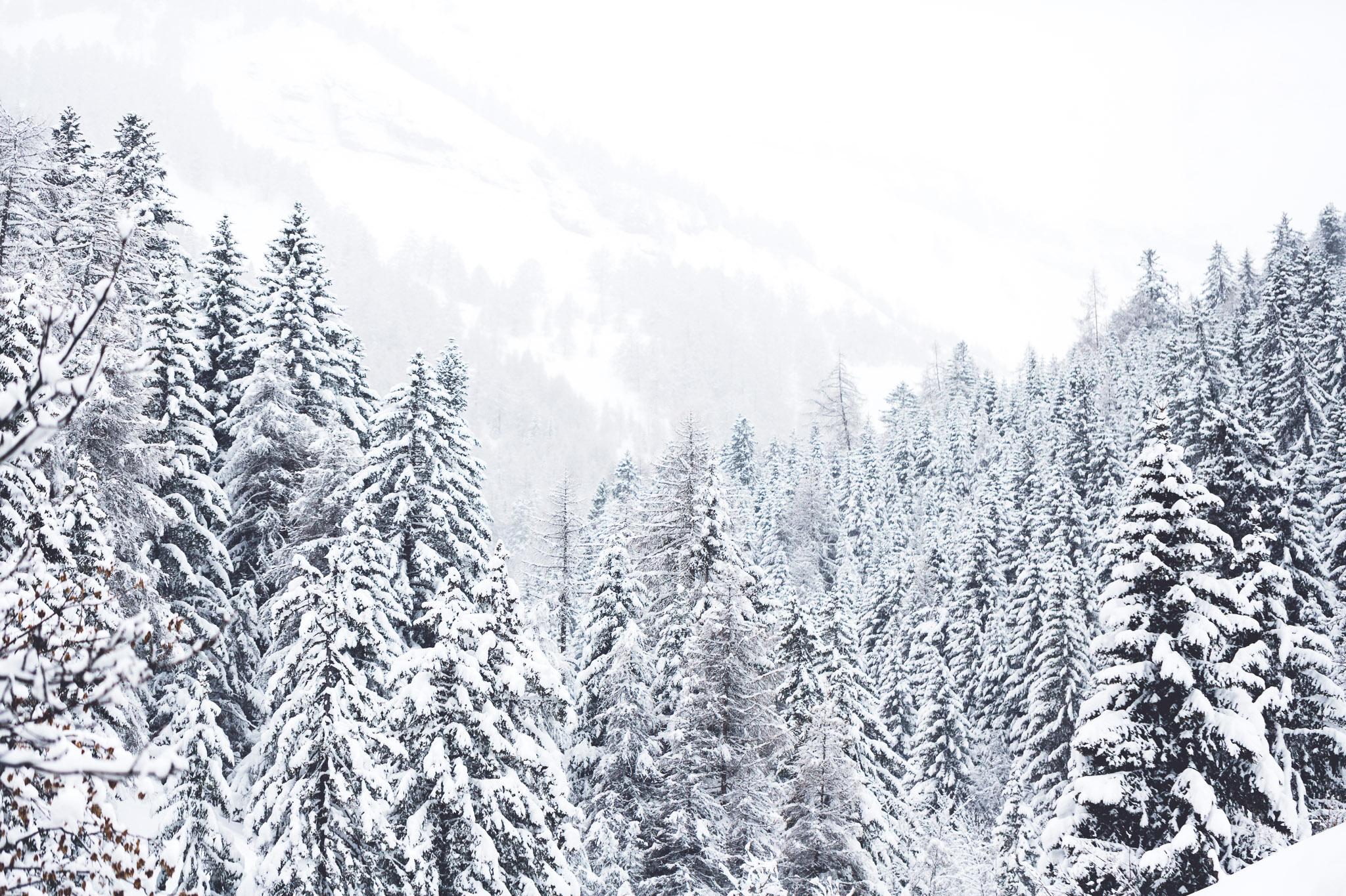 Verschneite Bergwälder