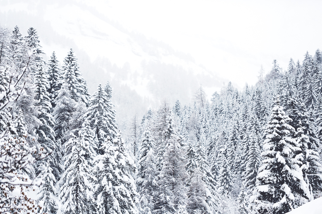 Schneewald
