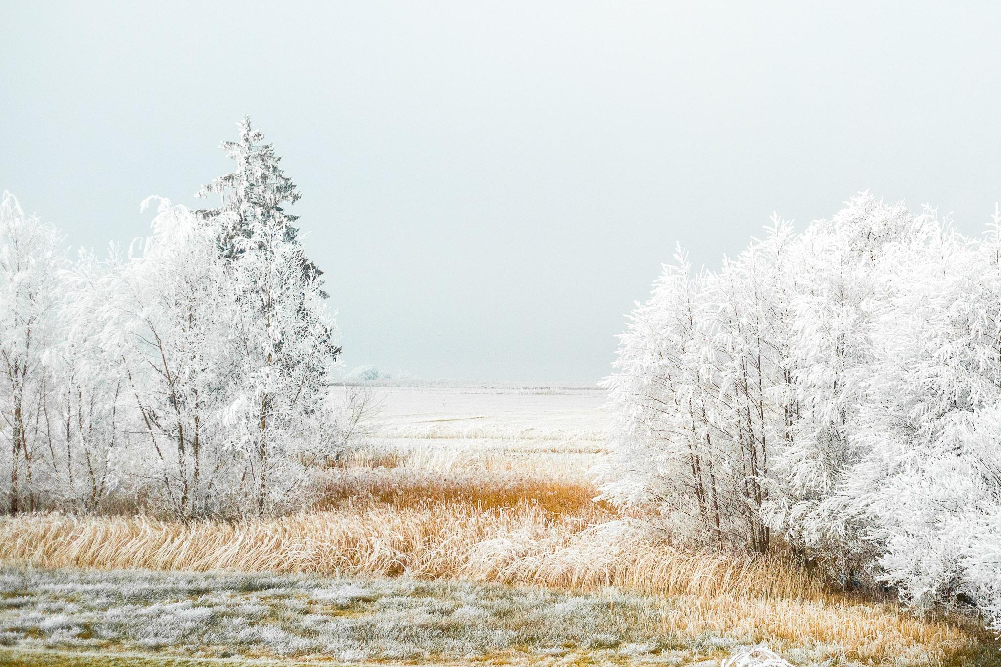 Eisiges Moor
