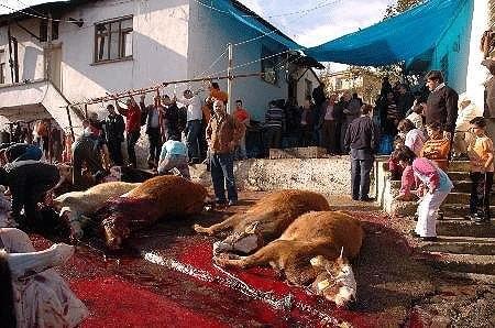 Türkei, Tierquälerei, Bayram, Islam, Tierrechte