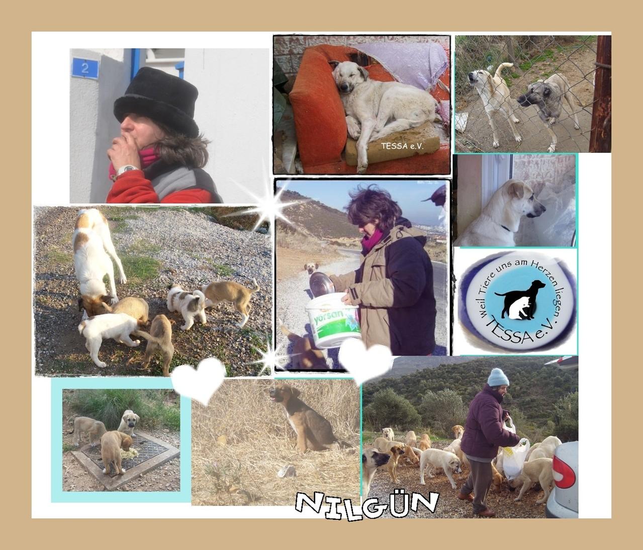 Tiere Brauchen Hilfe
