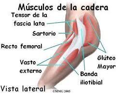 Ilustración de los músculos de la pierna y cadera