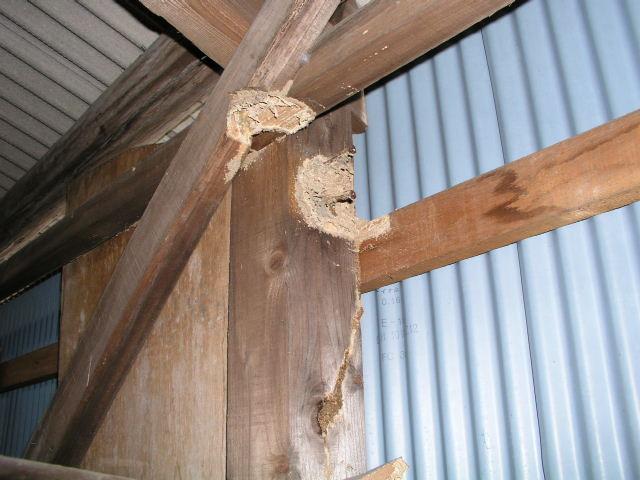 蟻道、外在の方が食害が進む状態
