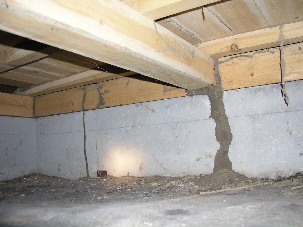 地下から大きな蟻道が作られてる
