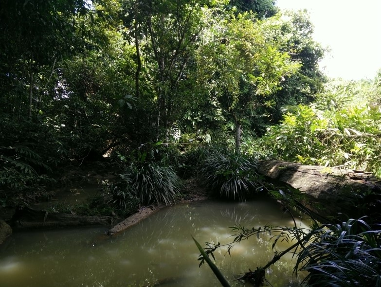 An environmental science's study site in Sabah. Photo credit to Darshanaa.