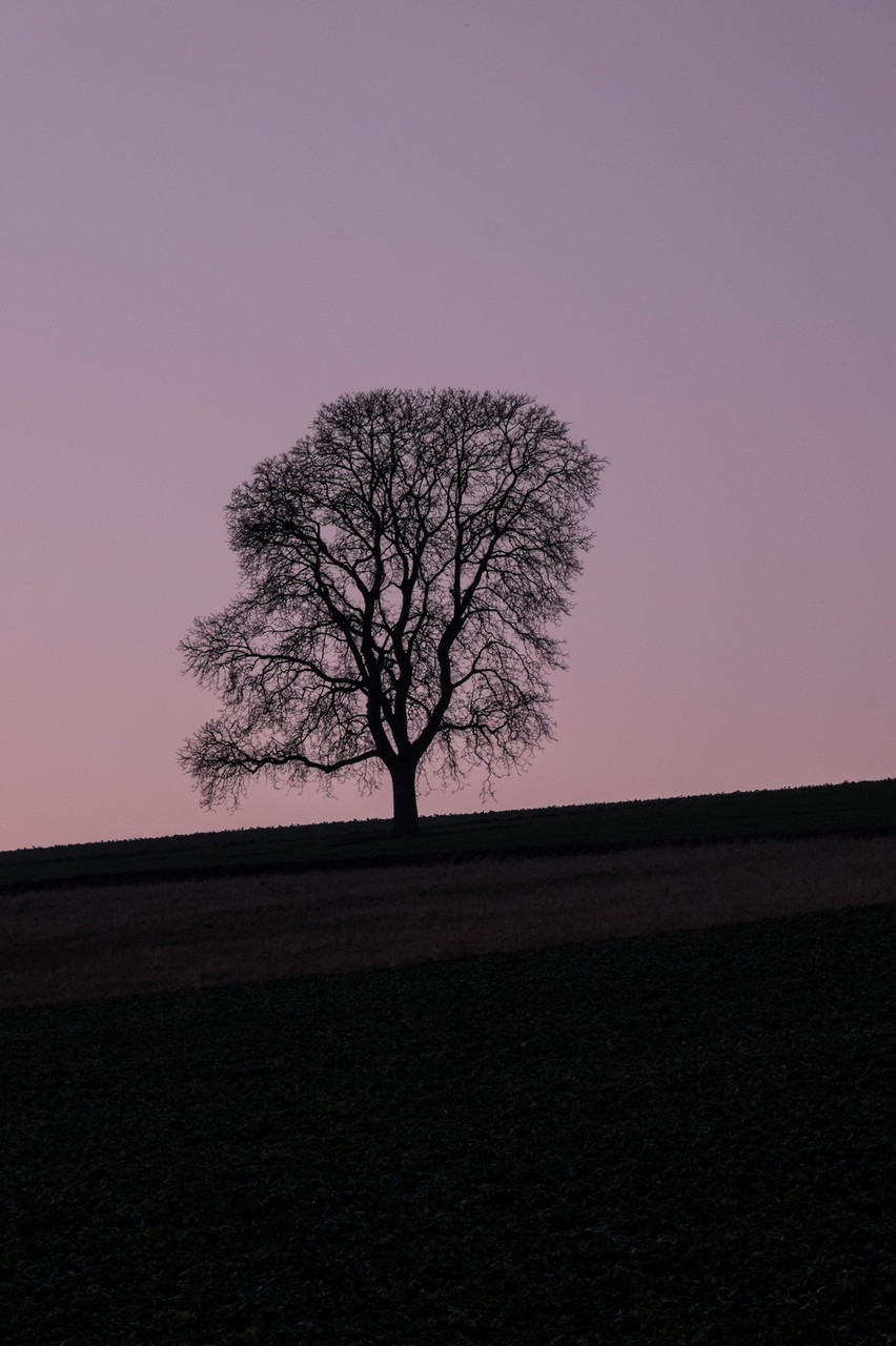 Roes Vulkaneifel