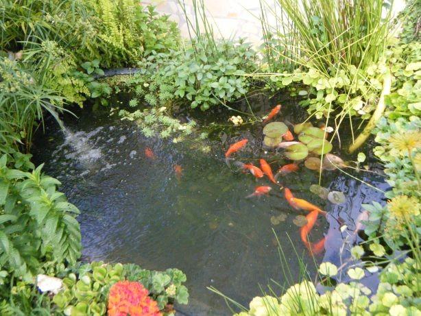 Venta de plantas acuaestanques el maravilloso mundo de for Precio estanque