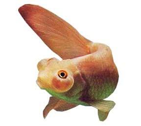 Toad head