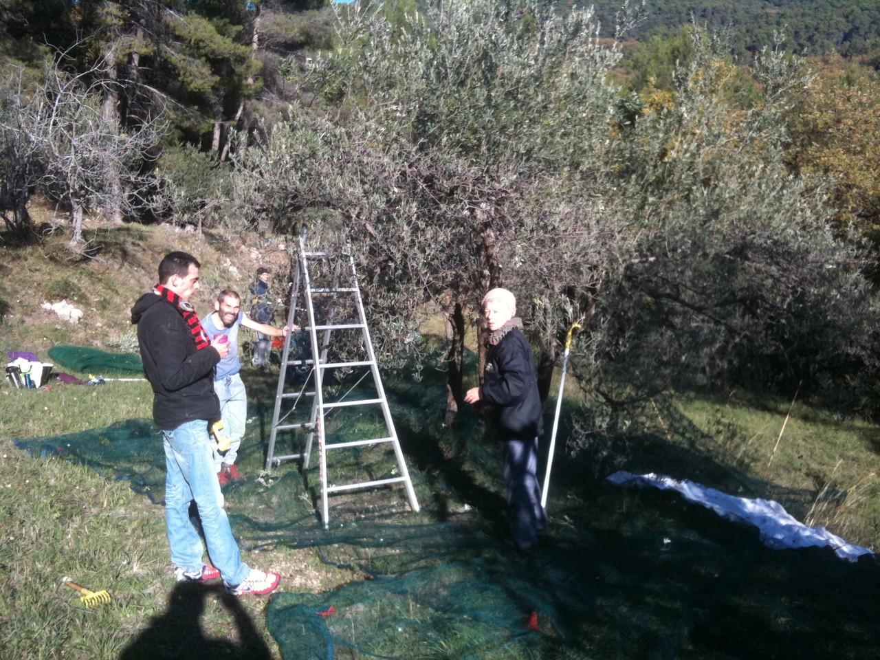 Le frère Matteo entouré de Jonathan et Odile a conduit cette première récolte