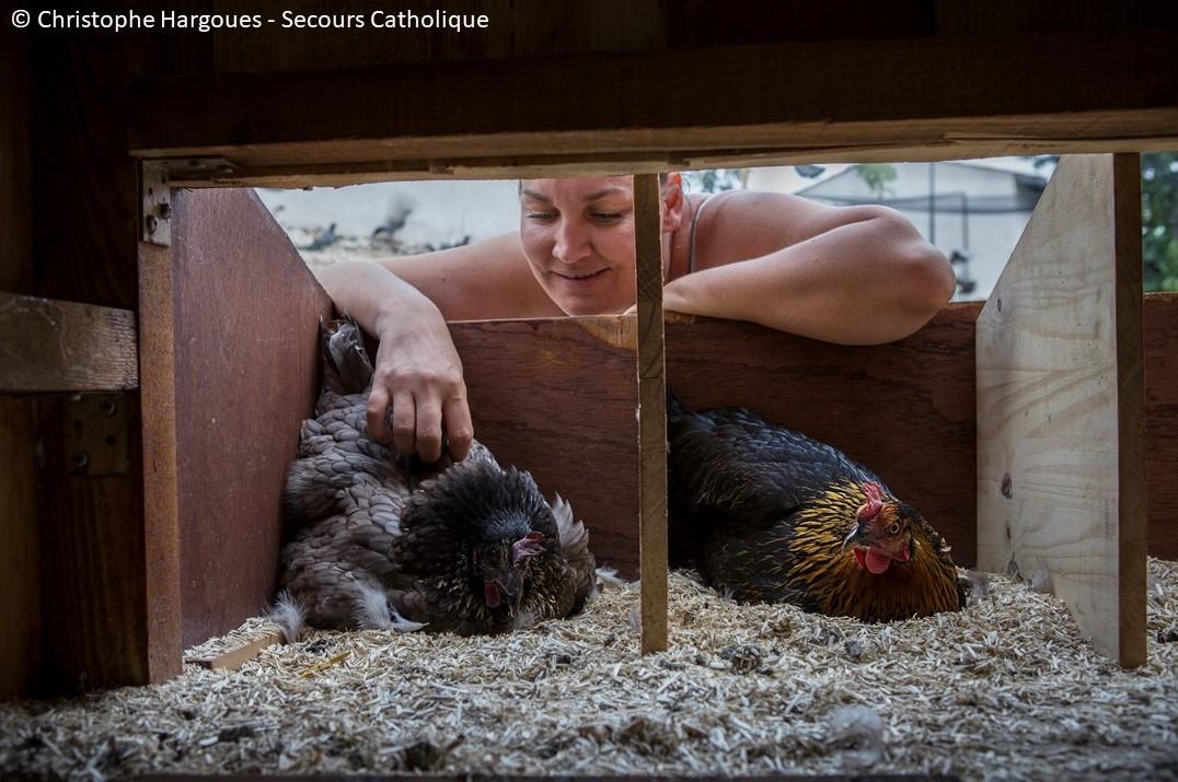 Des nouvelles des poulettes...