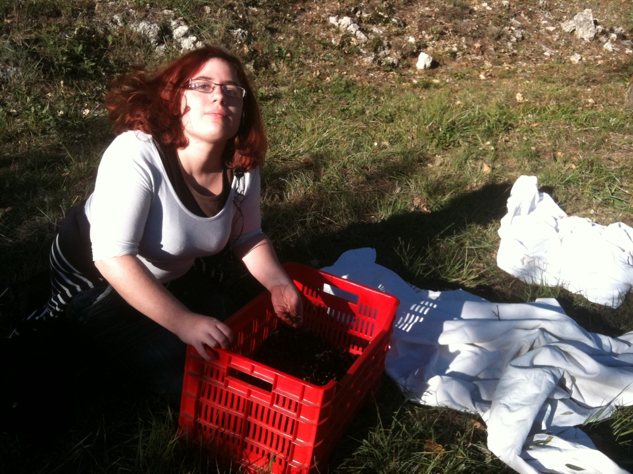Angèle nettoie les olives de leurs feuilles