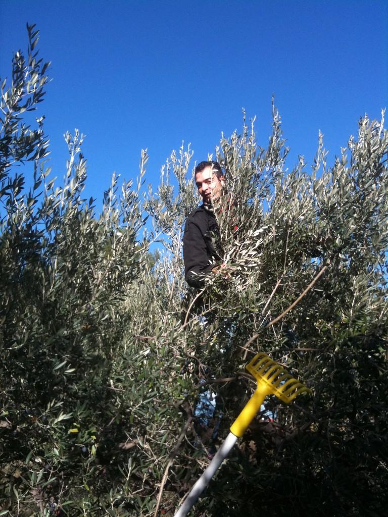 Jonathan retrouve ses souvenirs d'enfance en montant dans les arbres
