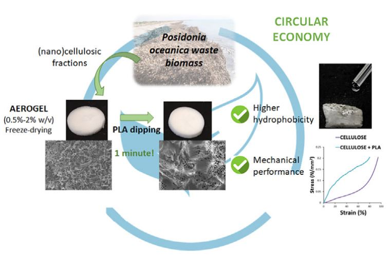PLA coating improves the performance of renewable adsorbent pads based on cellulosic aerogels from aquatic waste biomass