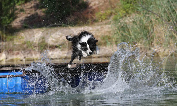 Dogdiving