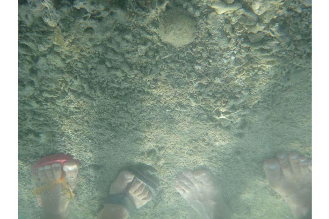 aus der Installation: Corals Merging and Emerging, Lambda C-Print auf PVC kaschiert, 39 x 29 cm, ICW und Tessa Miller, 2013