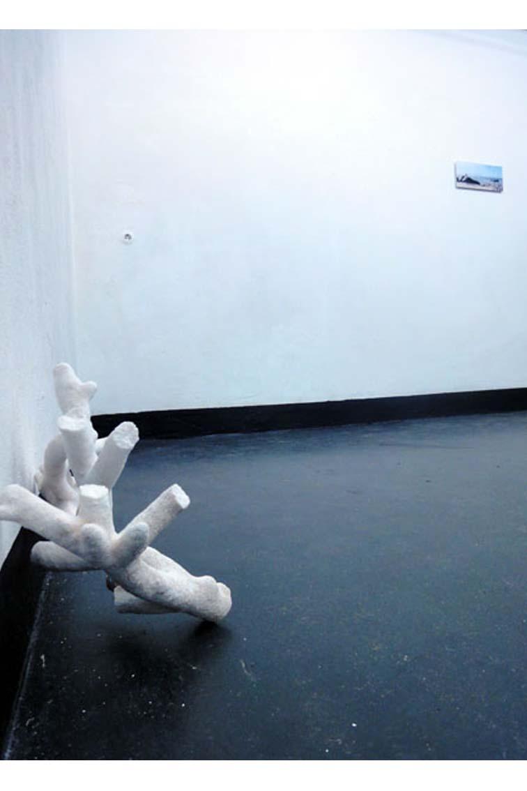 aus der Installation: Corals Merging and Emerging, Koralle, 45 x 356 x 20 cm, ICW und Tessa Miller, 2013