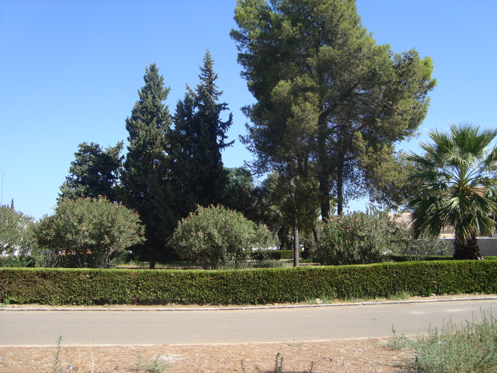 Jardines en calle Mayor (vistos desde la Ronda Sur)