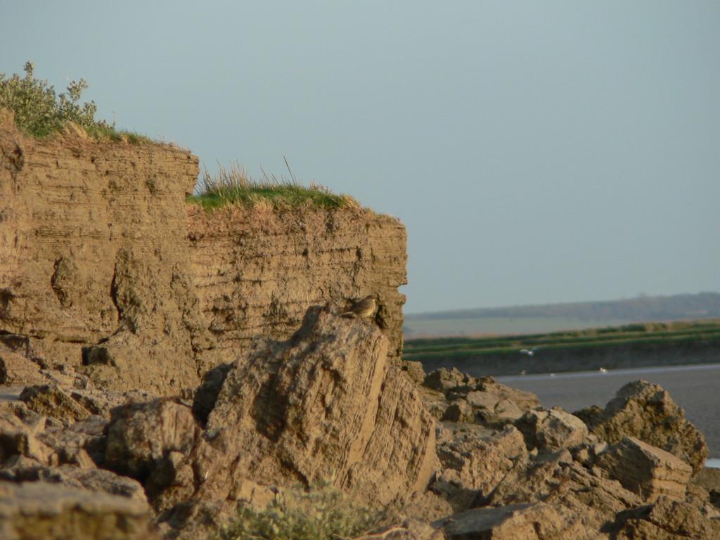 Le schorre en Baie de somme