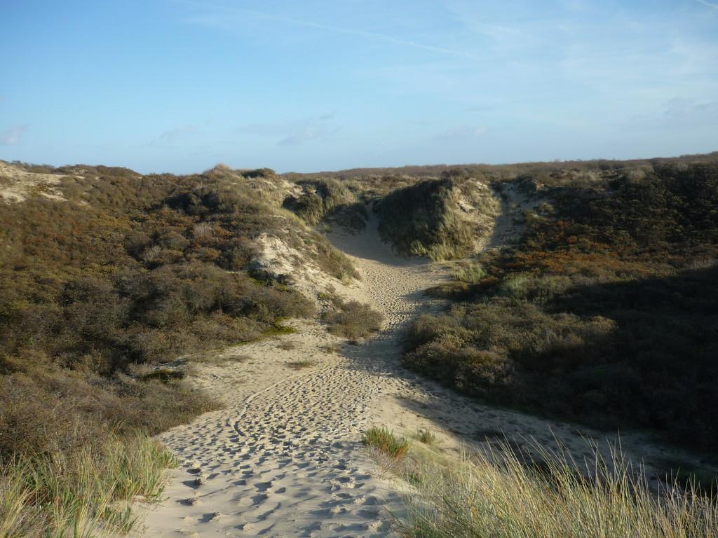 paysages de dunes
