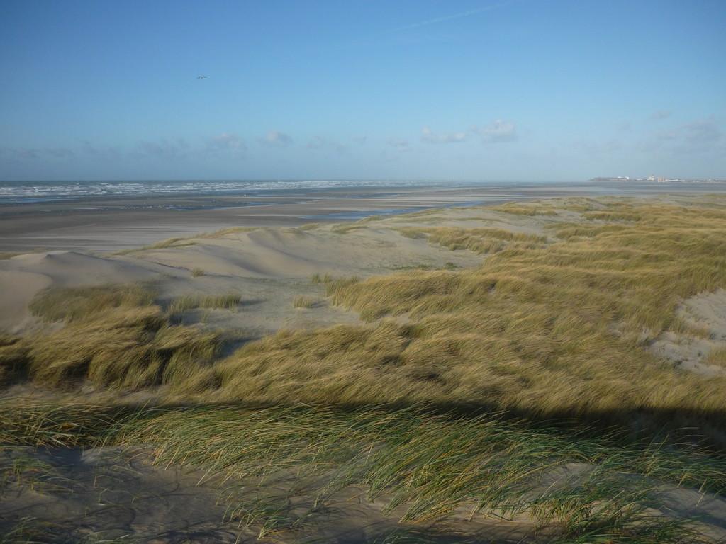 Les dunes de Fort mahon