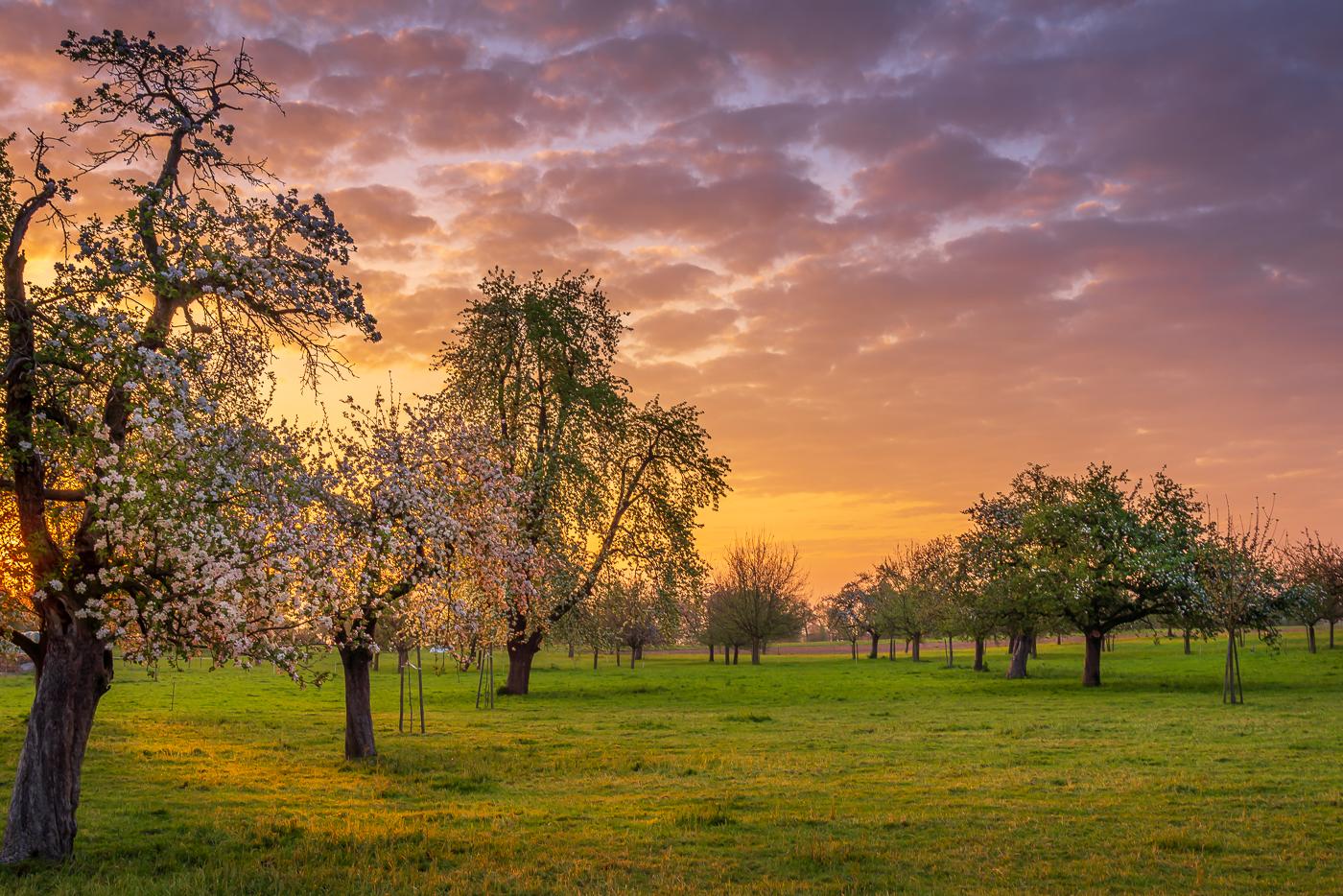 Apfelbluescht für Thurgau Tourismus