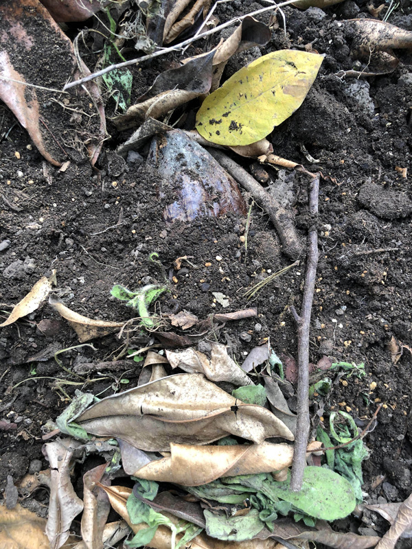 土の中は暖かいので発芽が早い