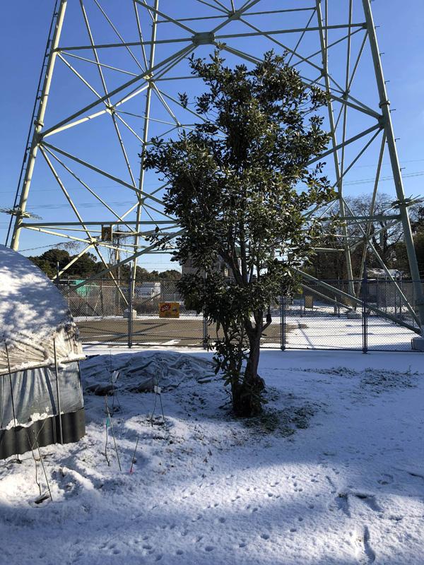 2021.01鹿児島市内も大雪
