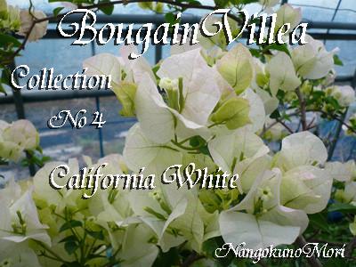 California White FK