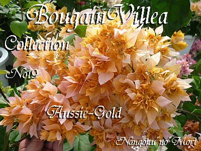 Aussie Gold