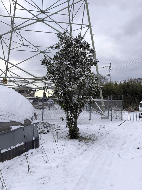 2021.02鹿児島市内またもや大雪