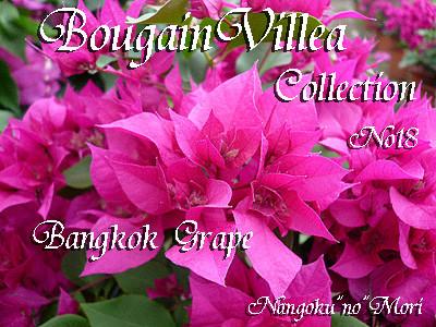 Bangkok  Grape