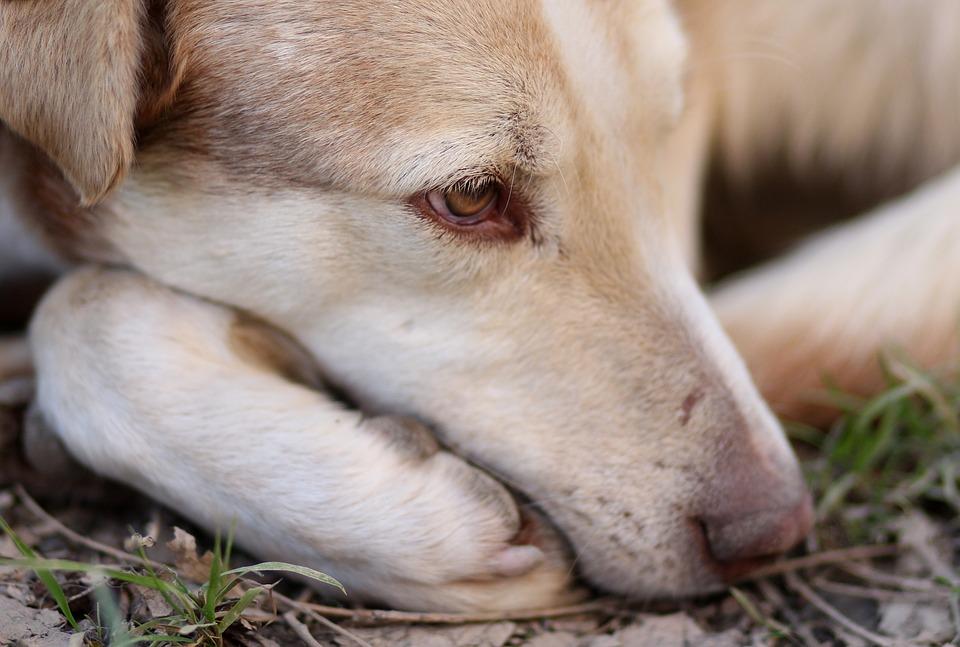 erlebnisberichte hund tanja budnick tierkommunikation f r hunde und pferde. Black Bedroom Furniture Sets. Home Design Ideas