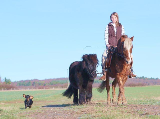 Juchhu, mit Pferd und Frauchen unterwegs, das macht Spaß!