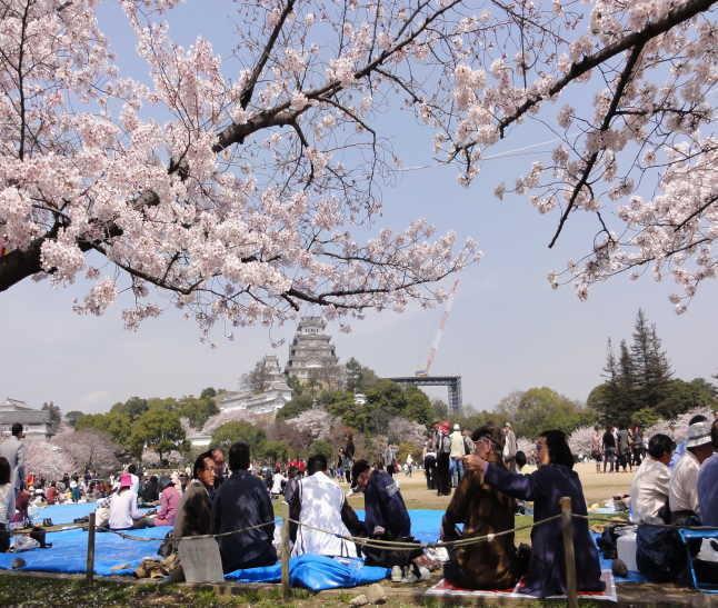 三の丸広場と花見客