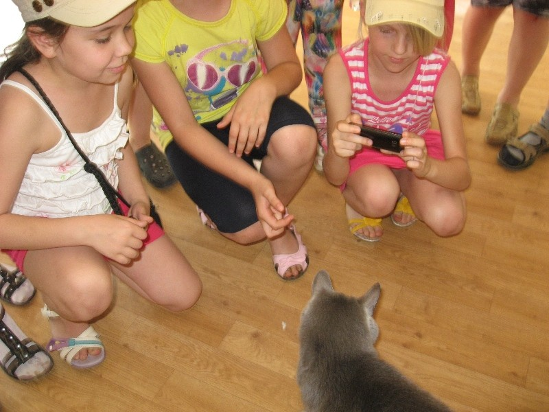 """Katinų muziejuje mus pasitiko pats jo """"direktorius"""" KATINAS"""