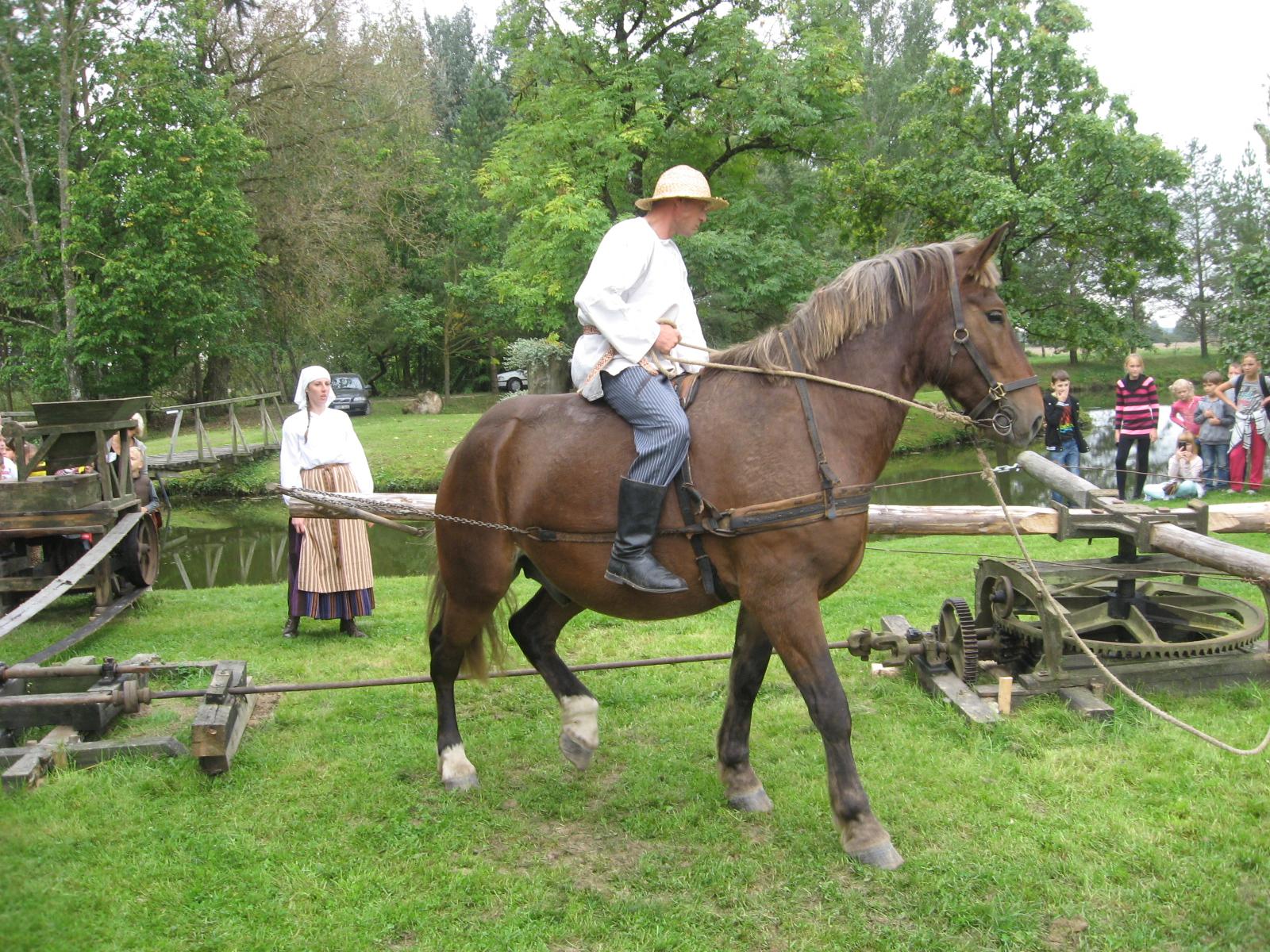 Arklys suka rusvelkį, kad veiktų kuliamoji
