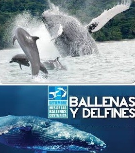 Whales Dominical