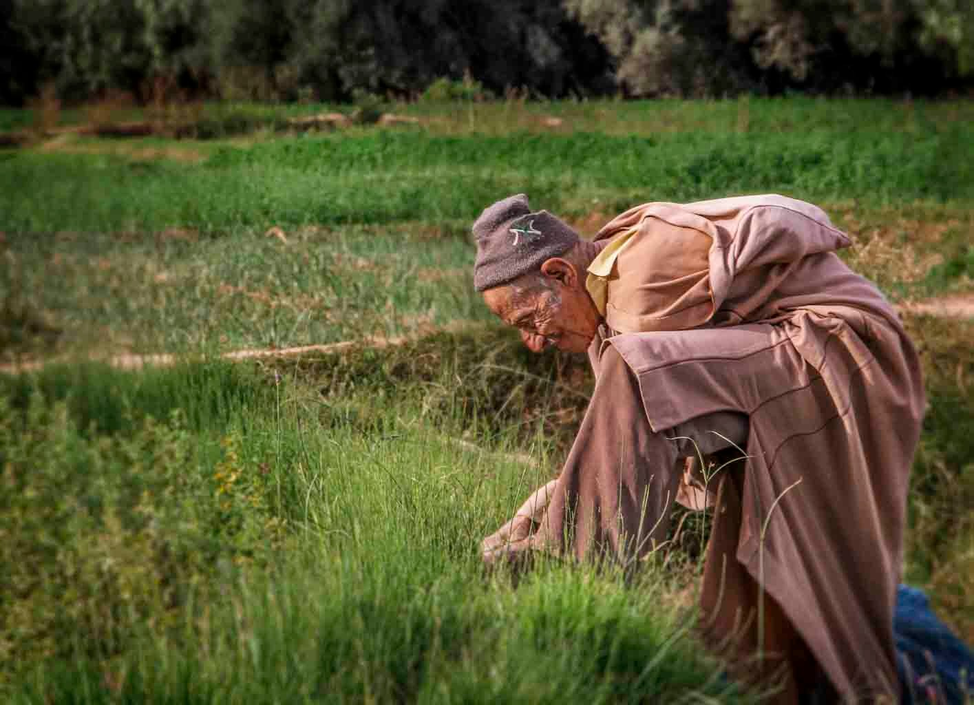 Tinghir Oasis - Morocco © 2014 Nik Schwald.