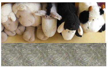 Auch unsere Stofftiere durften in unser Haus im Reli-zimmer einziehen.