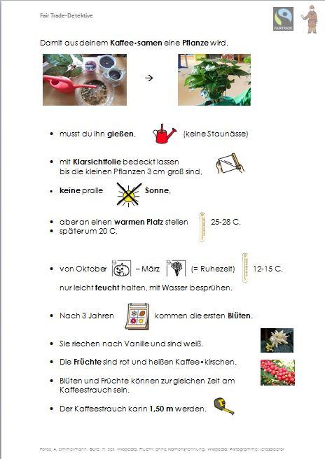 Anleitung Kaffeepflanze züchten mit Piktogrammen