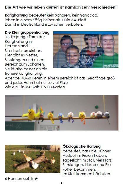 Broschüre Hähnchenhaltung, S. 6