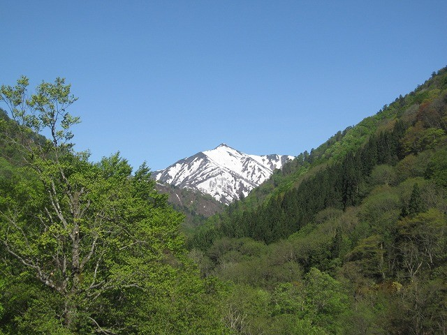 朝日鉱泉から見た主峰大朝日岳