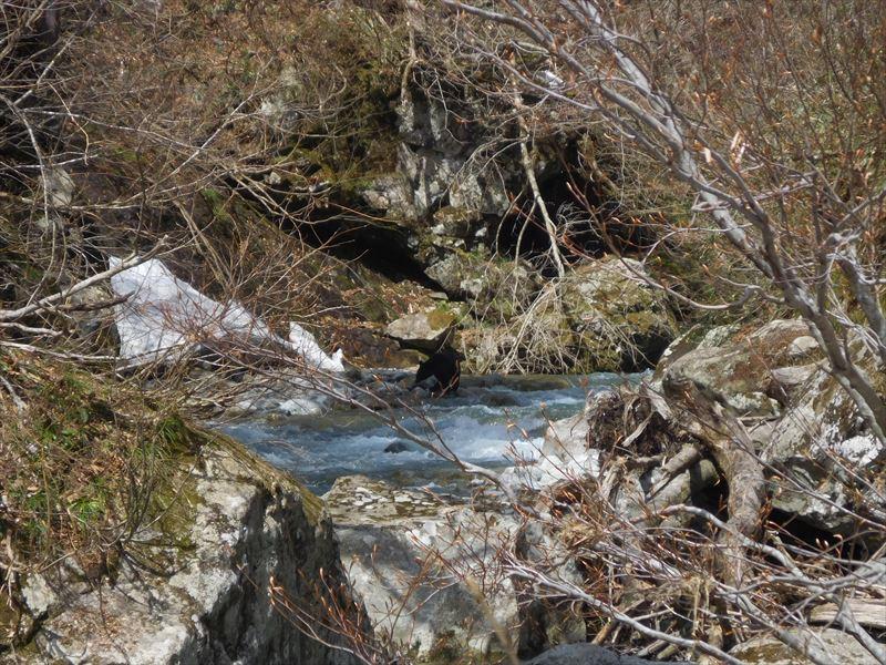 中央の河原で水浴び?…ツキノワグマも活動開始。